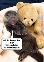 Snuggle Bear Meme - i can has cheezburger teddy bear funny animals online cheezburger