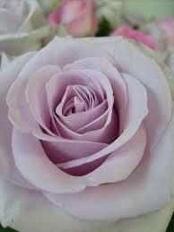cuisine parme parme photo de fleurs des fleurs a la cuisine
