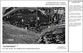 California Vegetaion images Carpinteria salt marsh reserve university of california natural jpg