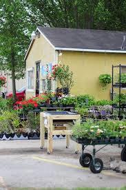 Houston Urban Gardeners - 29 best asters images on pinterest aster flower flower
