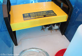 chicken brooder box design with backyard poultry forum view topic