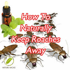 How To Get Rid Of Roaches In The Bathroom How To Naturally Keep Roaches Away