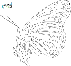 monarch butterfly coloring page kids coloring free kids coloring