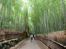 Alabama forest images Bamboo forest alabama pitstops for kids jpg