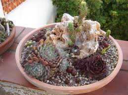 Succulent Rock Garden by Mini Rock Garden One Of These Cheesy Mini Rock Gardens As A Gift