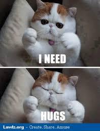 cat meme i need hugs setricssetrics