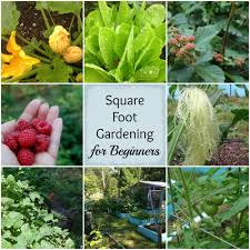 beginners guide to square foot gardening the cape coop