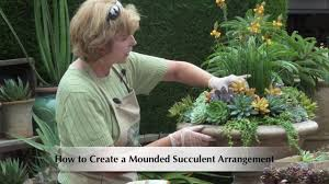 How To Make A Succulent Planter How To Make A Mounded Succulent Arrangement Youtube