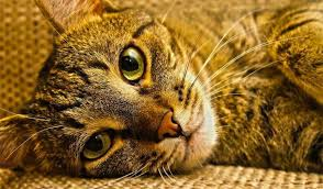 Colorado traveling with cats images Hospice for cats making the ninth life a good one colorado cat vet jpg