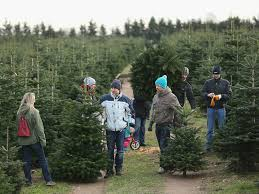 where to buy live christmas trees in bartow county cartersville