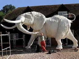 402 best white elephant images on elephant stuff