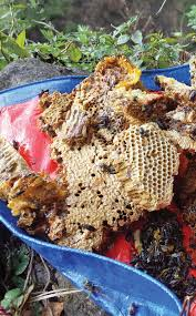 hunting for hallucinogenic honey in nepal vice
