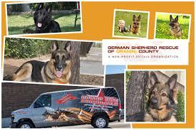 belgian sheepdog rescue ontario sitemap german shepherd rescue of orange county