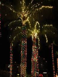 Christmas Decorations Palm Tree by If I Ever Move Back To Florida I Would Totally Have A Palm Tree