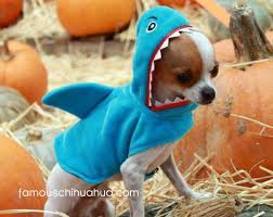 Halloween Costumes Dogs Cutest Puppy Costumes 2011 25 Chihuahua Costumes Ideas