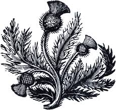 scottish thistle clip art clip art library