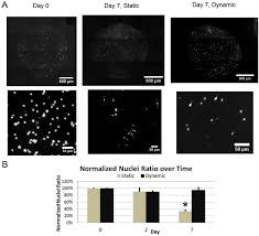 sensors free full text enhanced viability of endothelial