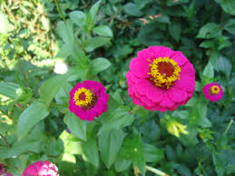 what did exceptionally well in your garden that bloomin u0027 garden