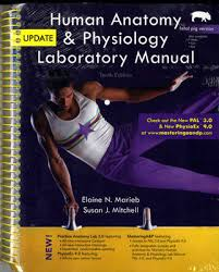Human Anatomy And Physiology Marieb 5th Edition Augusta Tech Bookstore New Edition Information In Preparation