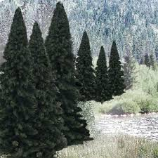 crocodile store bulk trees 2 4 evergreen 18pc