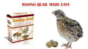 raising quail made easy review does it work or scam youtube
