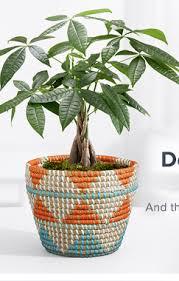 Indoor Fragrant Plants - buy plants online indoor plants from 29 99 proflowers