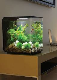 designed to house small fish or shrimp pered pets