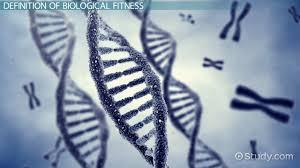 biological fitness definition u0026 concept video u0026 lesson