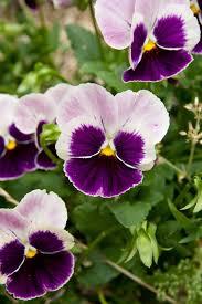 the flowers of summer at summer flowers s garden a harvest beyond my front door