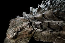 the amazing dinosaur found accidentally by miners in canada