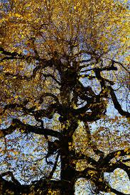 free images branch sky sunlight leaf trunk log