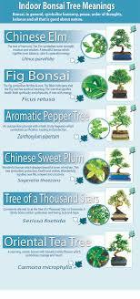 indoor bonsai tree meanings bonsai care