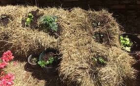 step by step of creating a straw bale garden straw bale garden