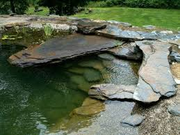 Backyard Swimming Ponds by 151 Best Pond Images On Pinterest Natural Pools Swimming Ponds