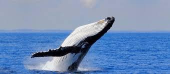 Whale Aqwa The Aquarium Of Western Australia Perth Underwater