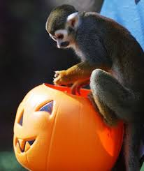spirit halloween san jose animals get into halloween spirit houston chronicle