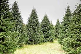 locally based tree company to supply official white house