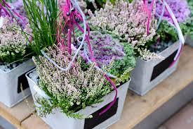 herbstbepflanzung balkon herbstblü und blumen für beet und balkon pflanzen breuer