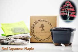 amazon com 9greenbox bonsai seed kit red japanese maple
