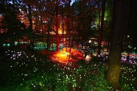 Botanical Garden Atlanta Lights Atlanta Botanical Garden U0027s Light Display Is Rather Dazzling