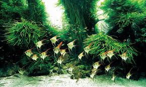 Most Beautiful Aquascapes The World U0027s Largest Nature Aquarium Project Takashi Amano X