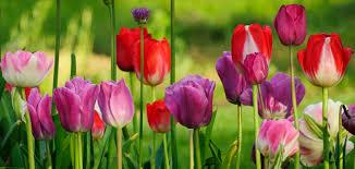 spring landscaping start spring in napa valley s carneros region pure luxury