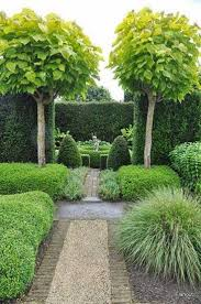 cool trees wonderful trees for home garden for small home decoration ideas