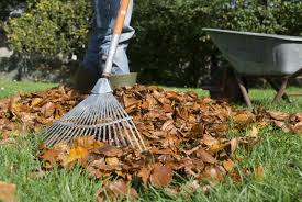 in fall general lawn care articles gardening know how