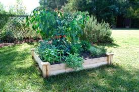 how to start a vegetable garden for beginners bonnie plants garden plants for your vegetable garden or herb garden