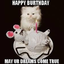 Happy Birthday Cat Memes - happy birthday cat happy bday wishes for your per cat