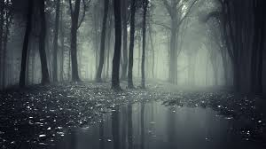 wallpaper tumblr forest creepy dark forest wallpaper