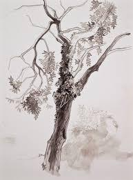 Carpenter Art Garden Why Draw Trees By Laurel Hooker U2022 Cleaver Magazine