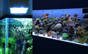 led aquarium lights for reef tanks aquarium lights lighting which to choose fish beginner