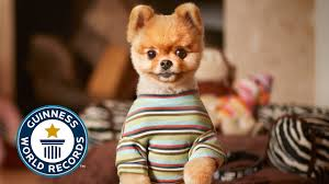 jiff the fastest dog on two paws guinness world records 2015